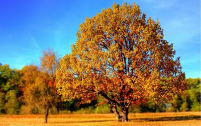 How A Tree Doctor Can Help You