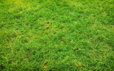 Factors That Lead To Residents Investing In Synthetic Turf In Sydney